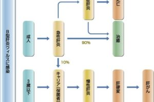 B型肝炎の感染症状